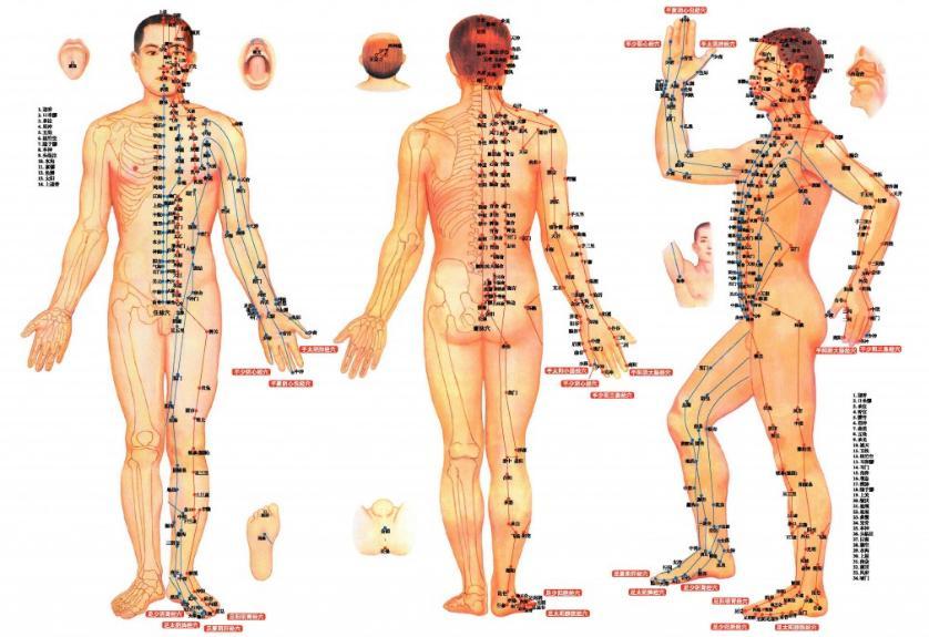Formation sur l'acupuncture, Partie théorique, Partie pratique, Commande